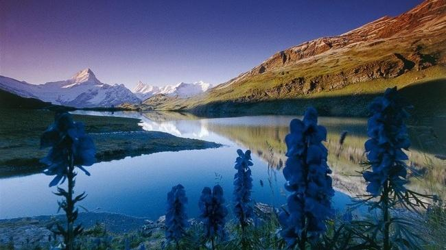 Oberland Bernese