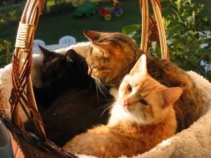 Alcuni dei gatti presenti all'interno dell'Agriturismo Peretti