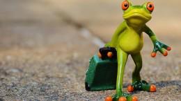 frog-897418_960_720