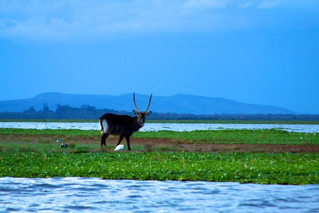 Vacanze in Kenya